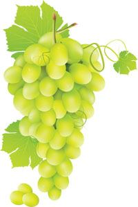Grapes Traditions